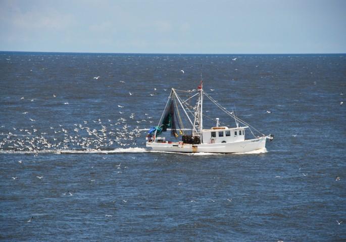 Shrimping off Amelia Island