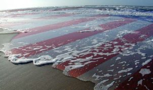American-Flag-in-the-Water-on-the-Beach--20037